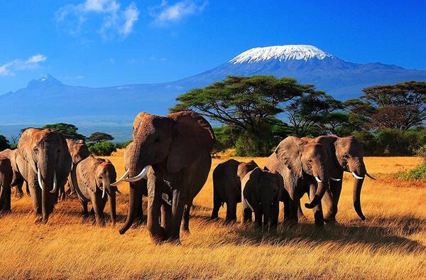 2 Days Amboseli