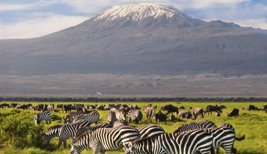 3 Day Amboseli-Zebras