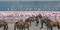 3 Day lake nakuru-Zebras