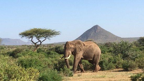 5 day mara, samburu and nakuru