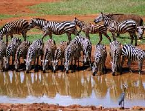9 Days Amboseli Mt. Kenya Samburu Nakuru Masai Mara