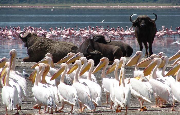 Lake-Nakuru-2 days