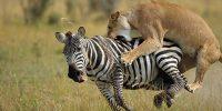 Tsavo wildlife