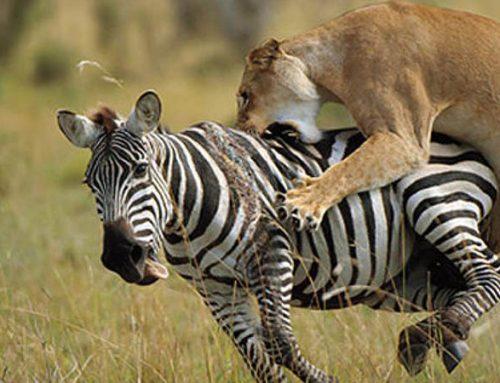 6 Days Amboseli Tsavo West Tsavo East Safaris