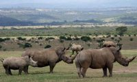 rhinoceros-at-aberdare-national-park