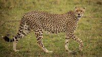 serengeti wildlie