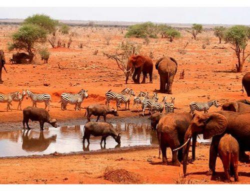4 DAYS AMBOSELI, TSAVO WEST & TSAVO EAST SAFARI