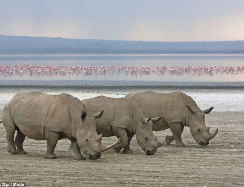 8 Days Lake Turkana and Samburu Safaris