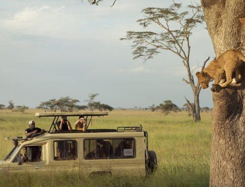Maasai Mara Budget Camping 3 Days